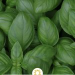 Essential Herbs and Spices for a Healthy Kitchen, Part 1: Basil, Oregano, Parsley, Italian Seasoning