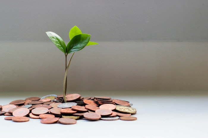 Green plant sprout from a pile of coins