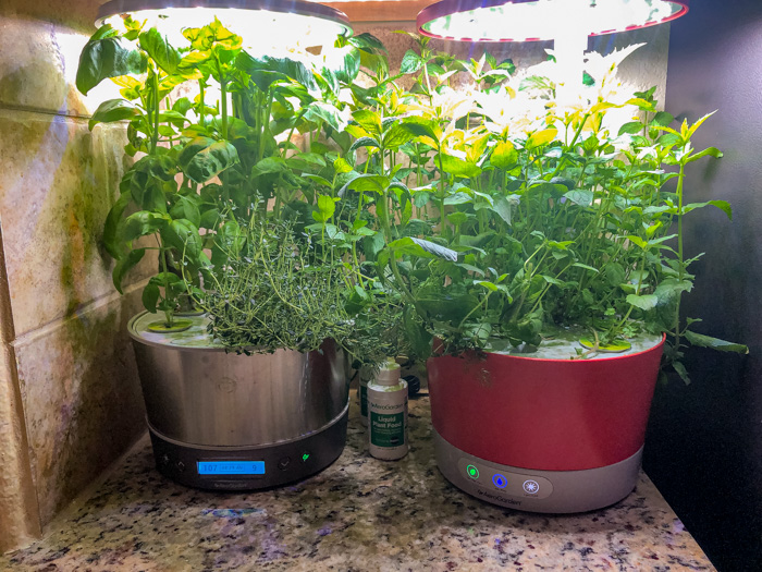 Two Aerogardens next to each other with herbs ready to harvest
