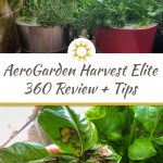 AeroGarden Harvest Elite 360 Review + Tips